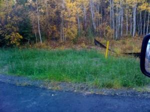 New Image grass pic copper bluff